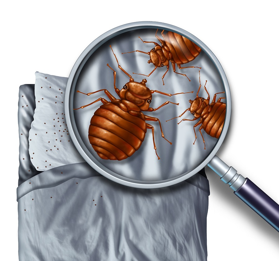 Durham NC Bed Bug Infestation